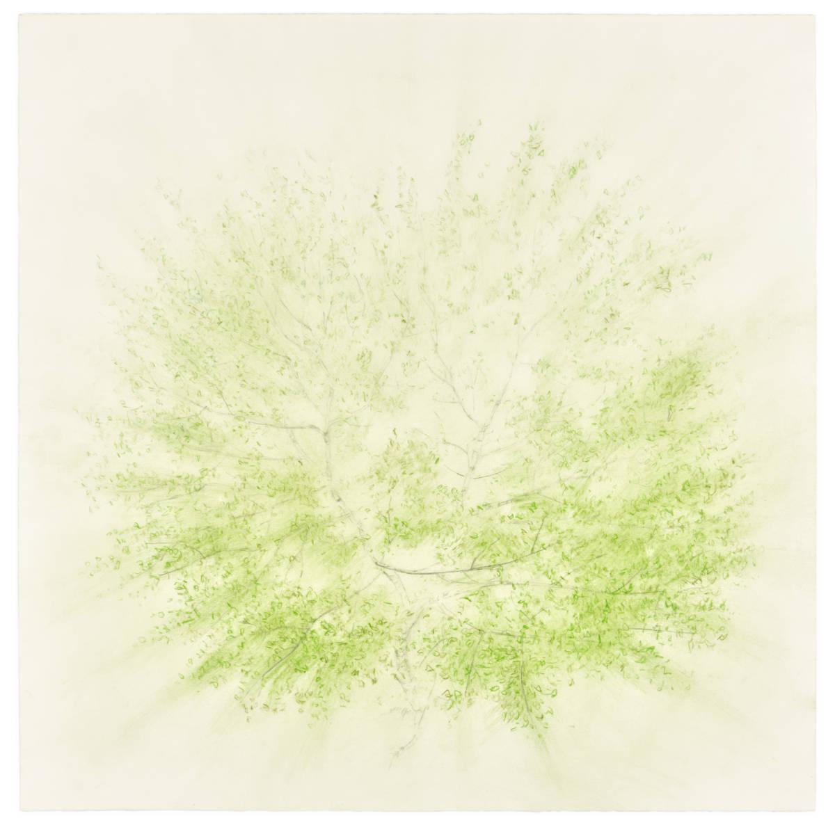 Breathe, 2020, coloured pencil & graphite on paper, 56 x 56cm